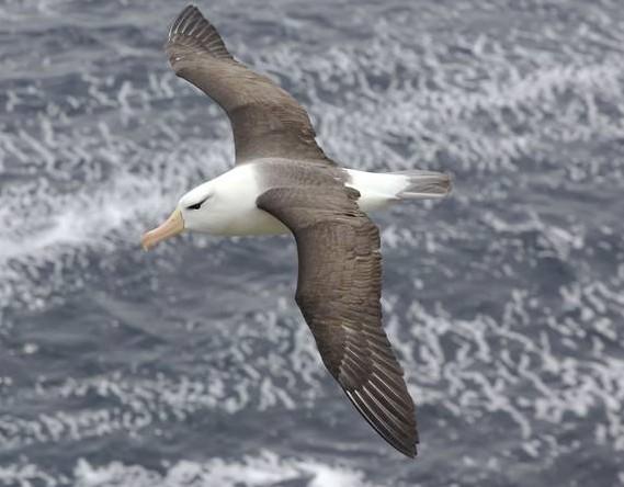 GPS定位器帮助专家探索海鸟飞行的秘密